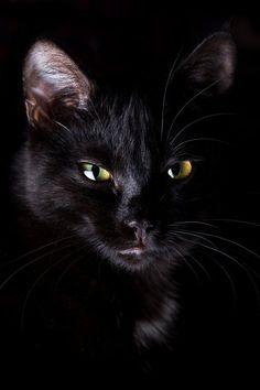 Merveilleux chat noir mais on dirait vraiment MON CHAT!