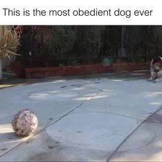 This dog is smarter than some people I know