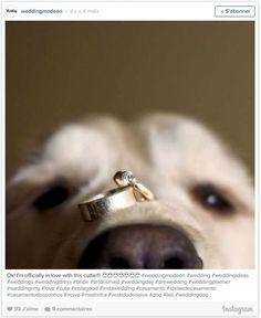 17 photos adorables de chiens qui fêtent le mariage de leurs maîtres