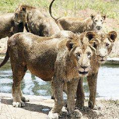Arignar Anna Zoological Park In Chennai