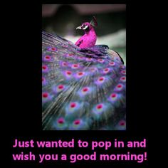 Good Morning!  God's Creations: http://myhoneysplace.com/more-gods-creations-updated-often/