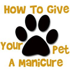 How to give your dog or cat at pedicure/manicure. Trim your pet's nails!