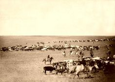 Cattle Round-up in South Dakota, 1887