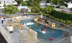 Doggy Daycare and Cage-Free Boarding Awesome bone shaped beach entry pool at a doggie daycare. Diy Pour Chien, Beach Entry Pool, Dog Playground, Pet Hotel, Pet Boarding, Pet Resort, Dog Daycare, Dog Park, Dog Houses