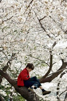 A boy buries himself in a book high up on a tree in Washington, D.C.