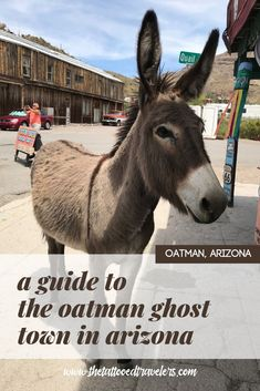 Taking a historic Route 66 road trip through Arizona? Be sure to not to miss the old ghost town of Oatman complete with cheesy souvenir shops, saloons, and the famous wild burros that freely roam the streets! www.thetattooedtravelers.com // Ghost Town // With Kids // Travel Arizona // USA #oatman #ghosttown #arizona Arizona Travel, Arizona Usa, Travel Oklahoma, Us Travel Destinations, Places To Travel, Route 66 Road Trip, Road Trips, Historic Route 66, Honeymoon Spots