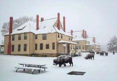 Mammoth, Yellowstone National Park