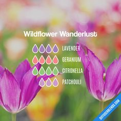 Wildflower Wanderlust — Essential Oil Diffuser Blend