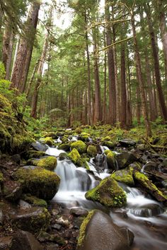 Insider's Guide to Olympic National Park: 10 Top Places to Visit in Olympic National Park   Seattle Met