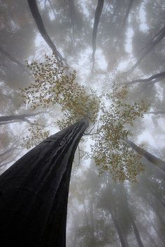 A collection of tree or wood related photos, quotes, history, facts and the people who work with them! All Nature, Nature Tree, Science Nature, Terre Nature, Beautiful World, Beautiful Places, Cool Pictures, Beautiful Pictures, Relaxing Pictures