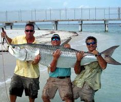 Tarpon Fishing In Boca Grande
