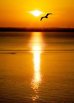 Flying High by Todd Klassy on Flickr.