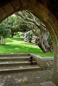 St Michael's Mount Gardens, Cornwall, England View of gorgeous gnarled tree through arch near garden entrance. Cornwall England, Devon And Cornwall, England Uk, Oxford England, Yorkshire England, Yorkshire Dales, London England, Travel England, The Places Youll Go