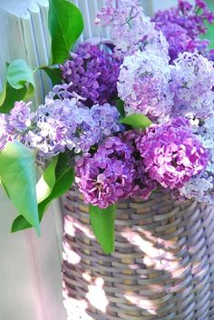 basket of lilacs.... favorite flowers ever!!!
