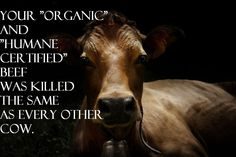 Your organic and humane-certified beef was killed the same as every other cow.