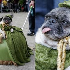 Hahaha! I love his tongue sticking out. And the fact that he's in a costume, possibly in a parade.