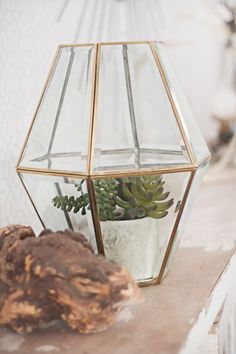 DIY Terrarium out of an old light fixture: brilliant idea!