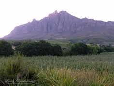 Mountain scenery, Tulbagh, Western Cape, South Africa Beautiful Scenery, Continents, South Africa, The Good Place, Cape, African, Memories, Mountains, Country