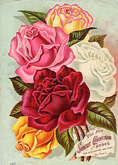 Free Image on Pixabay - Red, Rose, Vintage, Botanical Rose Vintage, Vintage Diy, Vintage Flowers, Vintage Images, Decoupage Vintage, Gif Rose, Vintage Seed Packets, Seed Catalogs, Rose Art