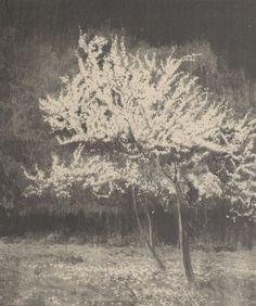 Kwitnące śliwy - Leon Wyczółkowski