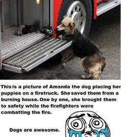 Dogs are truly awesome