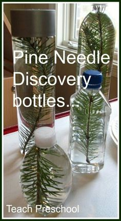 pine needle discovery bottle Pine needle sensory bottles (it would be great to have a shelf full of discovery bottles/cans.etc)Pine needle sensory bottles (it would be great to have a shelf full of discovery bottles/cans. Preschool Christmas, Preschool Crafts, Crafts For Kids, Teach Preschool, Preschool Winter, Frogs Preschool, Montessori Preschool, Numbers Preschool, Reggio Emilia Preschool