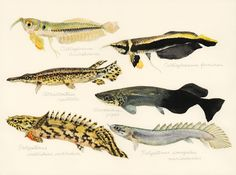 Baby Living Fossils | uonofu