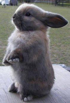 cute as hell bunny