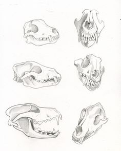 Wolf Skull Studies by kiraxlee
