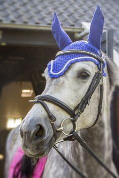 kobalt blue flybonnet, fly bonnet blue, earbonnet, grey horse, horse pic, horse fashion, custom fly bonnet, handmade earbonnet, etsy, dressage fly bonnet, showjumping horse