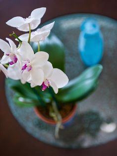Beautiful Orchids at Blog Cabin