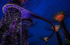 Gardens by the Bay - OCBC Skywalk. Gardens By The Bay, Travelogue, Places To Travel, Singapore, Wanderlust, Around The Worlds, Explore, Landscape, Country