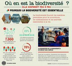La biodiversité -- la diversité des végétaux, des animaux et des écosystèmes dans le monde -- est un indicateur de l'état de santé de notre planète. La surexploitation des espèces, la destruction de leur habitat et les espèces invasives sont autant de menaces à la biodiversité de la Terre.  Source : Banque mondiale