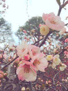 Sakura and all things pink 2016 Pink 2016, Sakura Mochi, Family Schedule, Spring Time, Bloom, Rose, Flowers, Plants, Beautiful