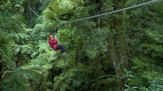 New Zealand's must do eco-adventure! Experience native New Zealand forest on an award-winning zipline adventure that earned us on TripAdvisor. Travel Usa, Travel Packing, Travel Europe, Travel Hacks, Travel Tips, Travel Ideas, Moving To New Zealand, New Zealand Travel Guide, Zipline Adventure