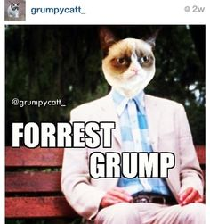 Grumpy cat funny, grumpy cat humor, grumpy cat meme, sarcastic funny, grouchy cat …For more funny quotes and hilarious images visit www. Grump Cat, Grumpy Cat Meme, Cat Jokes, Grumpy Kitty, Grumpy Dwarf, Funny Animal Memes, Funny Cats, Funny Animals, Funny Quotes