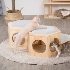 Cat Design, Animal Design, Cat Wall Furniture, Cat Heaven, Sheila E, Cat Enclosure, Cat Room, Cat Condo, Cat Decor