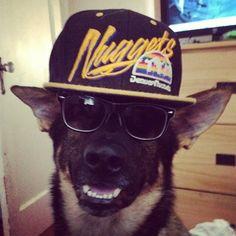 Denver Nuggets   #Nuggets #Dog