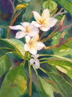 """Original watercolor painting titled """"Fragrance"""" of a plumeria tree in Maui Watercolor And Ink, Watercolor Flowers, Watercolor Paintings, Watercolor Classes, Abstract Paintings, Watercolours, Realistic Flower Drawing, Acrylic Painting Canvas, Canvas Art"""