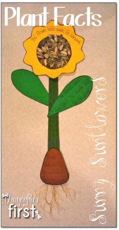 Sunny Sunflower Plant Facts