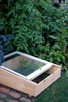 cold-frame-in-garden-2