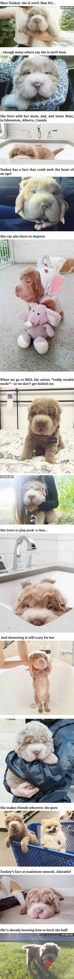This Dog Looks Like A Bear And It's Really Popular Right Now
