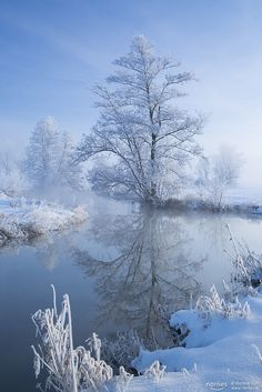 😍🐘😍🐘 Photo from About Nature. Winter Love, Winter Snow, Winter Christmas, Winter Photography, Landscape Photography, Nature Photography, Winter Magic, Winter Scenery, Snow Scenes