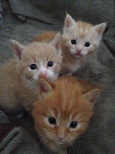 Pin By Marina Schroeder On Baby Animals 3 Cute Baby Animals Cute Funny Animals Kittens Cutest