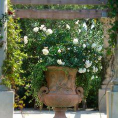 Image Gallery italian garden design ideas