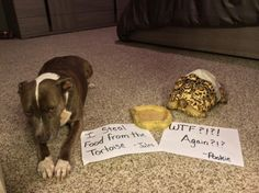 More Cases of Dog Shaming