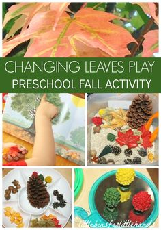 Fall Activity Discovery Table for Preschool and Toddlers. Explore changing leaves during the Fall with simple literacy, math, and science play and sensory activities.  Perfect early childhood Fall themed ideas.