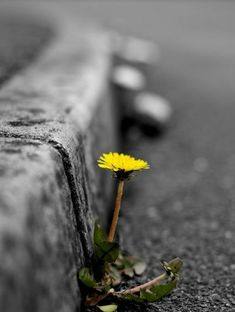 color splash dandelion / yellow Nature is the best Art Maker Splash Photography, Color Photography, Creative Photography, Black And White Photography, Amazing Photography, Nature Photography, Pinterest Photography, Photography Ideas, Foto Macro