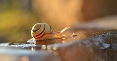 "Just Pinned to Snails ノ"": http://ift.tt/2pDmlsg"