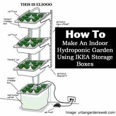 How to Make An Indoor Hydroponic Garden Using IKEA Storage Boxes maybe combine with aquaponics #hydroponicgardening #hydroponicgardens